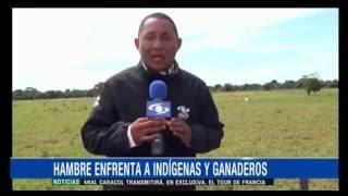 """Indígenas cazan ganado en Casanare por """"falta de alimentos"""""""