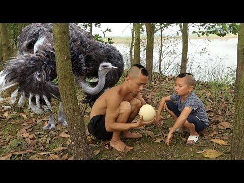 Trứng Thần Điểu Loài Chim Lớn Nhất Thế Giới - Cười Vỡ Mồm Với Pha Trộm Trứng Chim Bị Phát Hiện - Thời lượng: 37:24.
