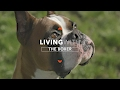 ALL ABOUT LIVING WITH BOXER DOGS