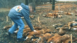 Maryland must ban this cruelty by The Humane Society of the United States