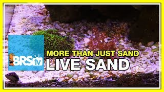 Week 12: Proof: Live Sand isn't as dull as you thought! | 52 Weeks of Reefing #BRS160