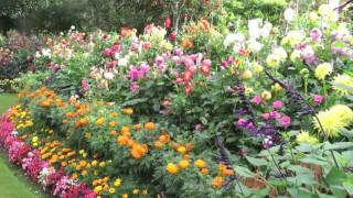 Geoff & Heather's Dahlia Garden in the UK