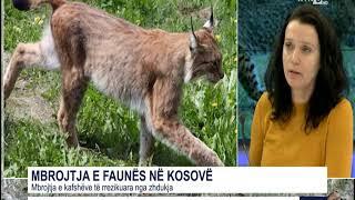 Studio e hapur - Mbrojtja e faunës në Kosovë 17.01.2019