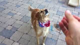 Самая неуклюжая собака в мире!