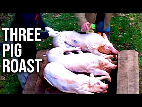 Three (3) Whole Pigs Roast Barbecued Low and Slow with Head and All – BBQ Pit Boys