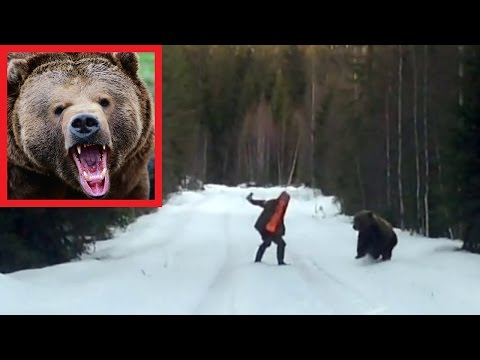 Вот так просто можно отпугнуть медведя