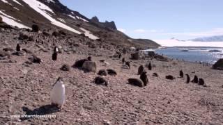 Initial frame of Antarctica video