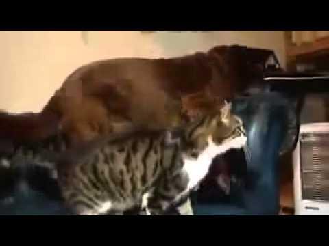 un gatto si prende cura di un cane cieco! commovente!