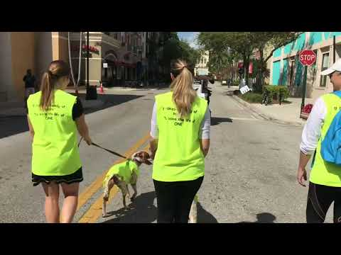 Peggy Adams Walk For The Animals 2018