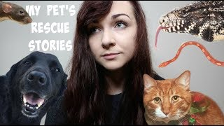My Rescue Pets (+ Their Stories) by Maddie Smith