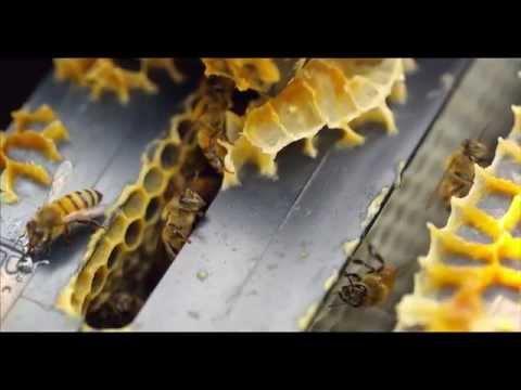 Купить мёд в москве цена