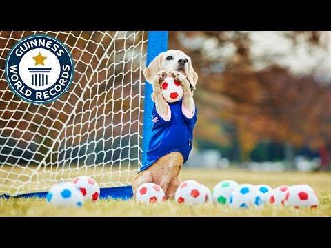 World record ball catching dog