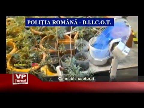 Cannabis capturat