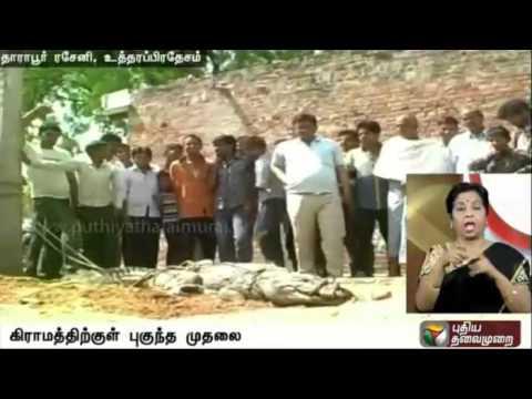 Villagers-caught-dangerous-crocodile-in-uttar-pradesh