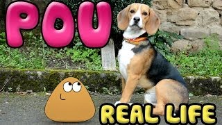 Pou in real life!