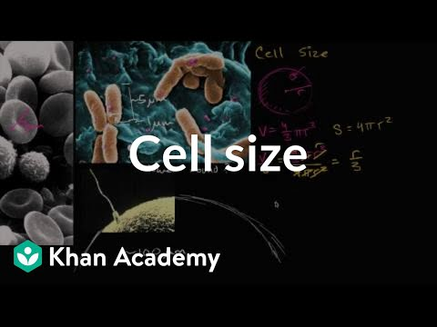 Cell size (video) | Structure of a cell | Khan Academy