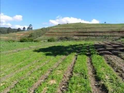 Agricultura orgânica em Gonçalves MG - Turismo rural na Fazenda Cajarana