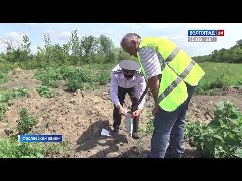 В Среднеахтубинском районе выявлено нерациональное использование сельхозземель