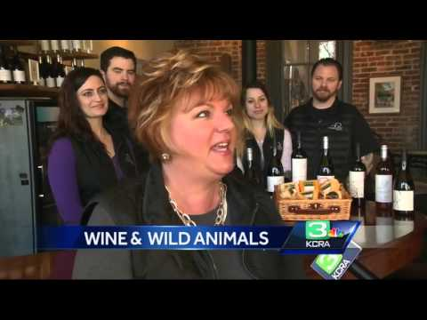 Winters winery mixes wildlife, wine for Valentine's Day