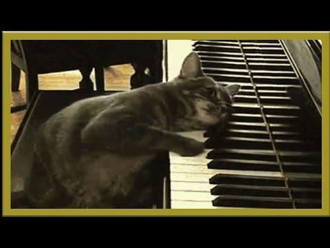 Сборник приколов Коты и танцы