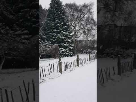 Snow in Stafford 2017