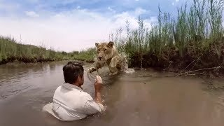 Video GoPro VR: For the Love of Lions MP3, 3GP, MP4, WEBM, AVI, FLV Agustus 2017