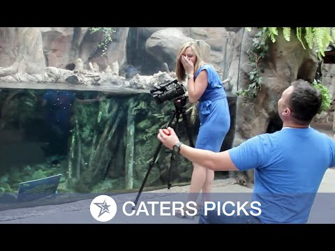 Otterly Adorable Surprise Proposal