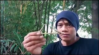 Video Pusaka Misterius Tertimbun Di lokasi Perburuan Bambu Petuk.. PRING PETUK MP3, 3GP, MP4, WEBM, AVI, FLV Januari 2019