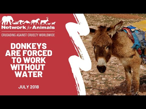 For TEN YEARS The Authorities Have Done NOTHING To Stop Donkey Abuse!