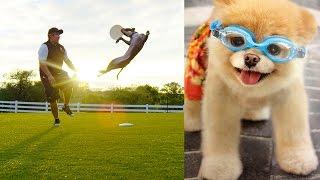 World's Most Amazing Dogs in Super Slow Motion! Incredible Dog Challenge in 4K!   DEVINSUPERTRAMP
