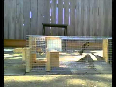 trampa para aves - Aqui otra versión de mi trampa para pajaros que la puedes adquirir por aqui mandandome un correo electronico directamente: mgrax@hotmail.com y me haces el pe...