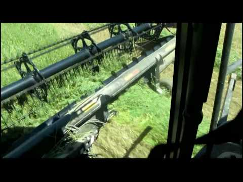 swathing - Swathing Oats for hay, Case AFX8010.