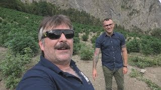CompanyX Outdoor CBD Grow in the Swiss Alps by Urban Grower