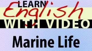 Marine Life Lesson