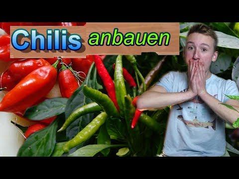 Chilis erfolgreich anbauen / Unser Chilijahr 2017