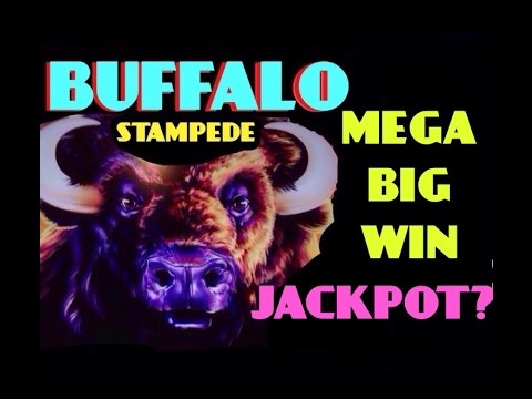 **JACKPOT?** BUFFALO STAMPEDE slot machine HUGE MEGA BIG WIN
