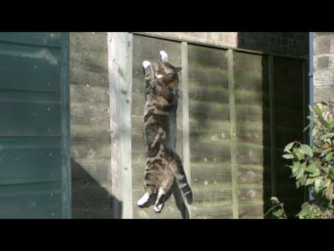 Slo-mo Guys: Gravity Defying Cat