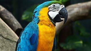 """""""سعيد فرحانة"""" يحلق عاليا ليمزج روعة وجمال طيور من مواطن متعددة"""