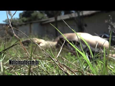 Gargamel morto e comparsas presos em Lages