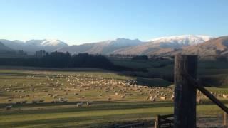 Garston New Zealand  City pictures : Flocking Sheep