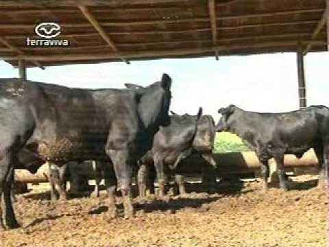 Pecuaristas preparam animais para 2ª Etapa da Campanha de Vacinação Conta Aftosa