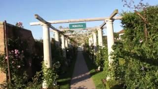 #973 Ein Spaziergang durch den Rosengarten von David Austin
