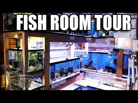 MOST Inspiring fish room EVER!!