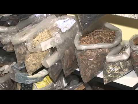 Ervas medicinais são encontradas no Mercado Municipal em Paranaguá - Jornal Última Hora