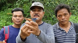Download Video menjebak burung tali pocong di hutan MP3 3GP MP4