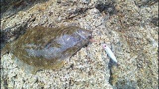 ムーチョ・ルチアでヒラメ釣り