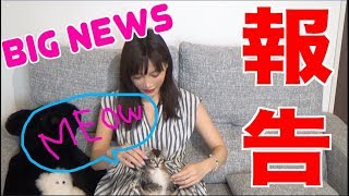 【BIG NEWS】 I'm Keeping A Cat!!! [CC Available] |Yuka Kinoshita