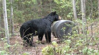 Video Quebec Bear Hunt MP3, 3GP, MP4, WEBM, AVI, FLV Juni 2017