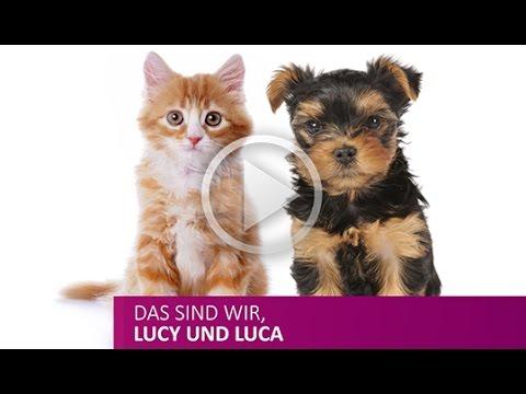FELLNASEN naturgesundes Katzenfutter Welpen-/Hundefutter Allergikertierfutter in Bioqualität kaufen