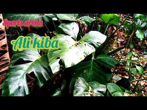 Ali kiba ft Diamond platnumz _ Number one CCM ( official video)
